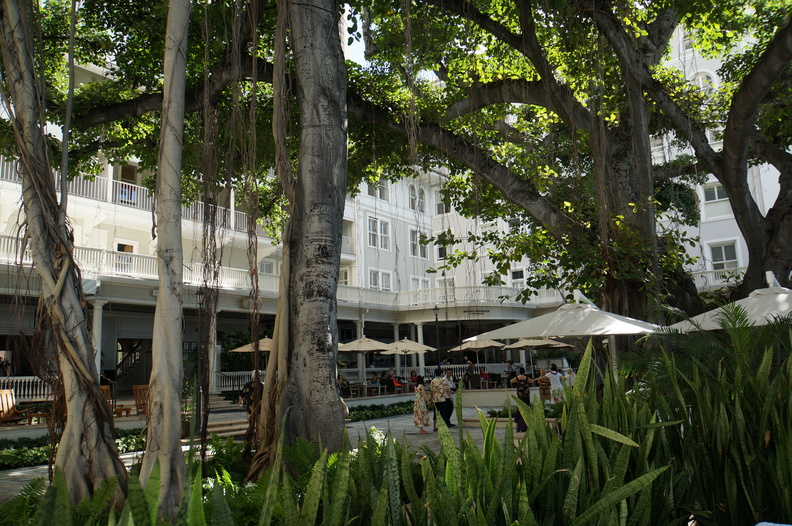 Old banyon tree at Moana Surfrider hotel